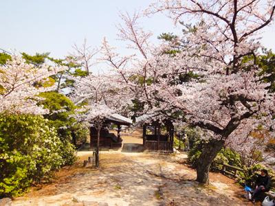 宮尾城跡の桜