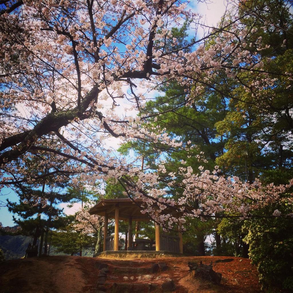 写真 2014-03-30 10 04 31