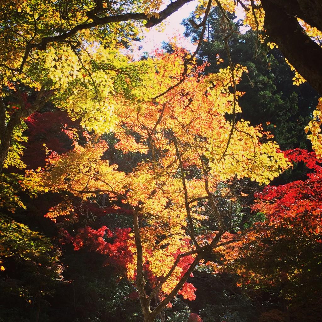 黄色や茜色に色づいた紅葉