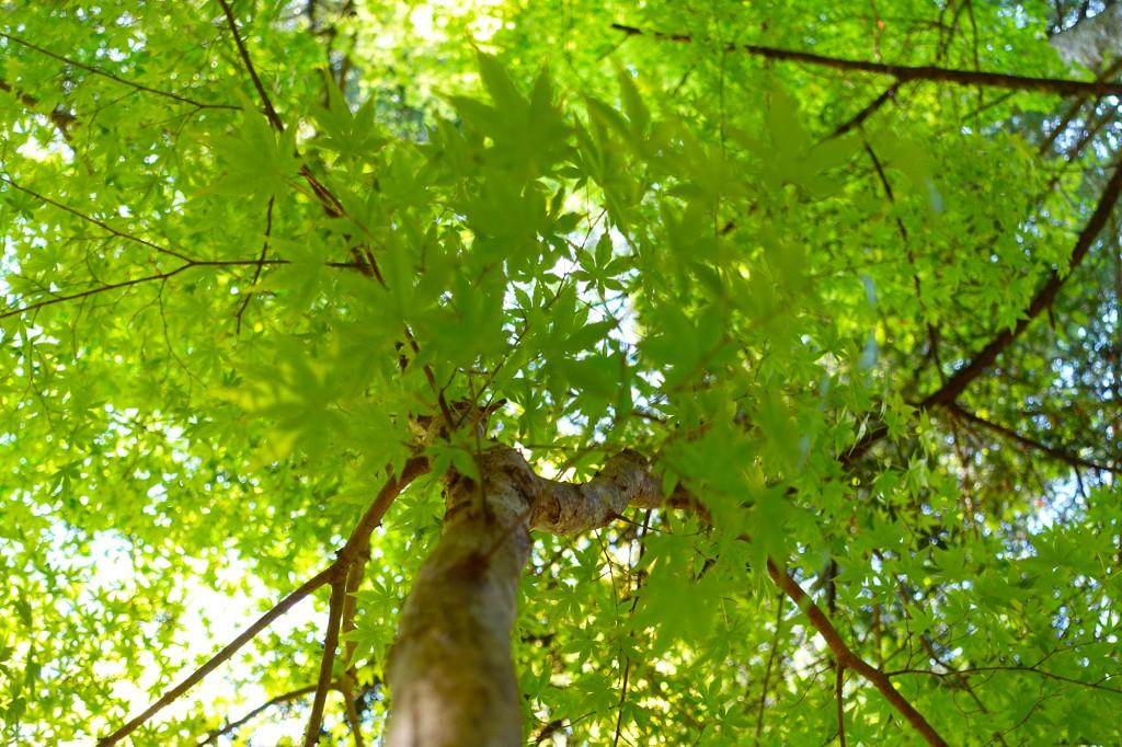 一面に広がる青々とした木々が美しいです。