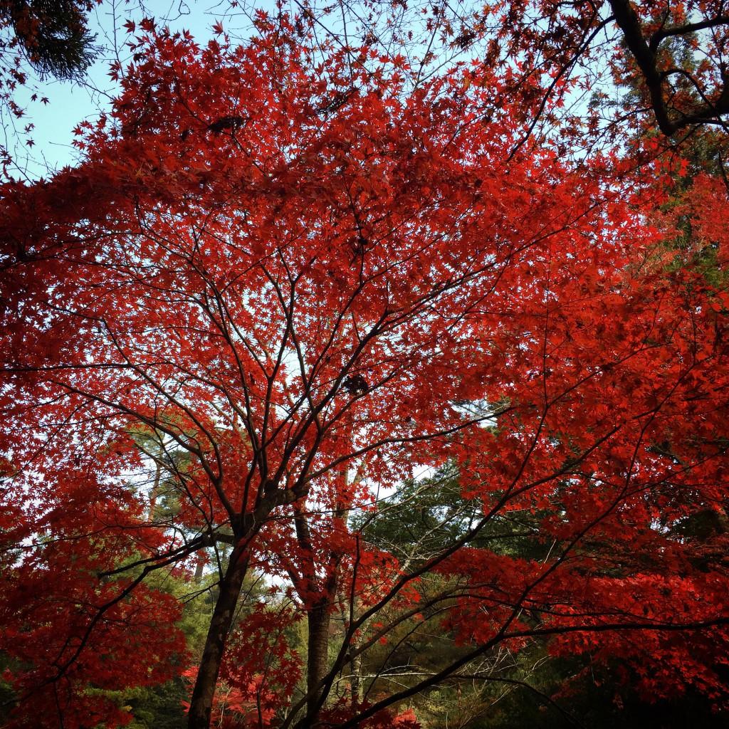 新緑とは違った紅の世界・・・