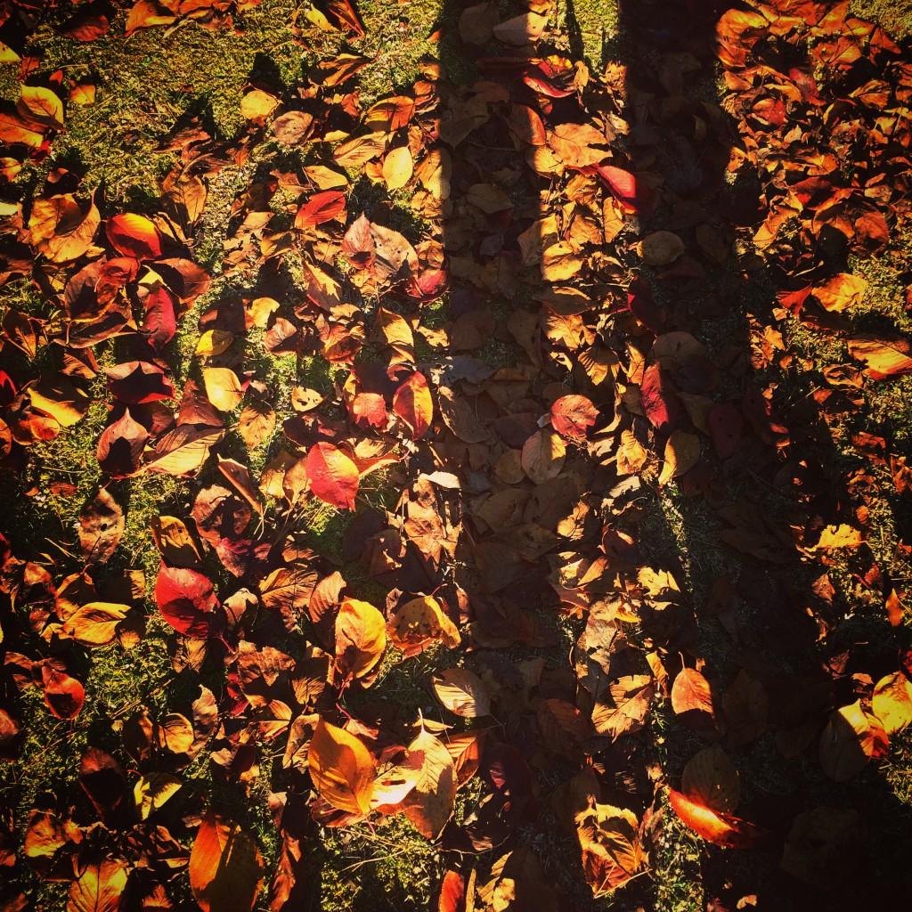 写真 2014-11-15 14 53 25