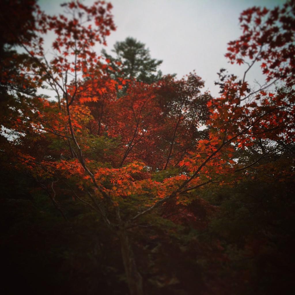 写真 2014-11-08 14 41 33